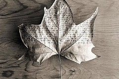 Autumn Day