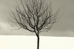 Song of the Arid Orange Tree
